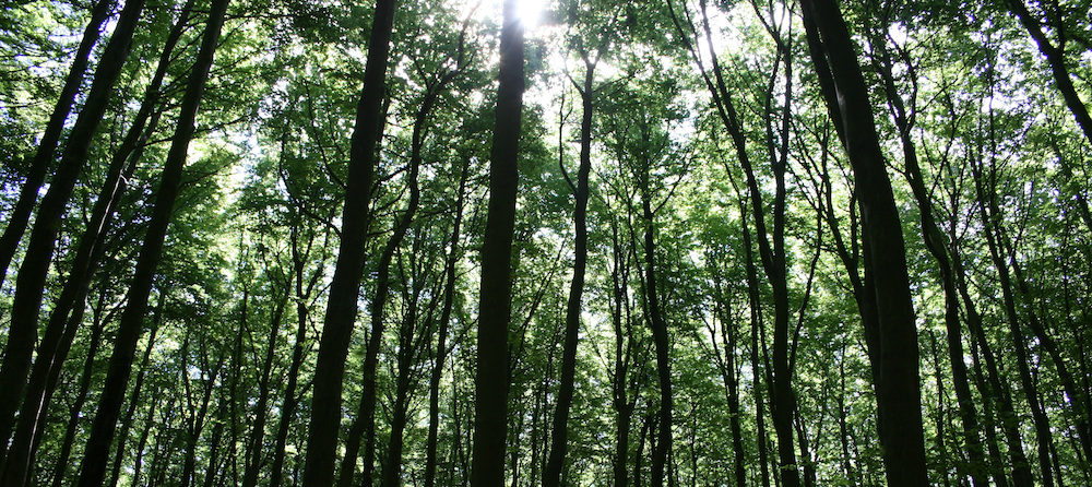 Naturepanel